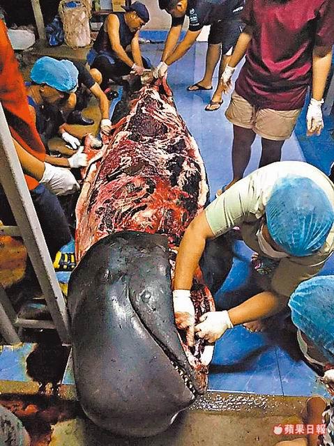 獸醫解剖鯨魚屍體,赫然發現肚內滿滿都是塑膠袋。路透